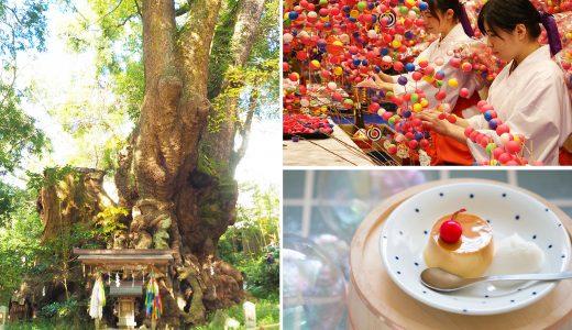 ことりっぷ記事掲載:2019年初詣におすすめの神社2記事